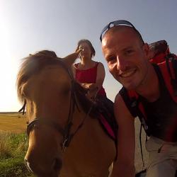 Les chevaux en baie de Somme
