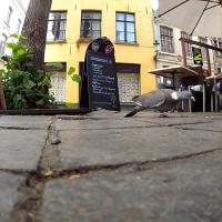 Pigeon de Brugge